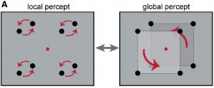 figure1-perceptioncontours