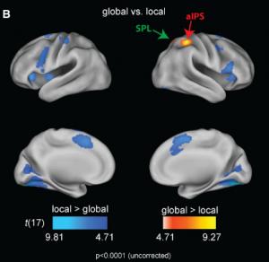 figure2-perceptioncontours